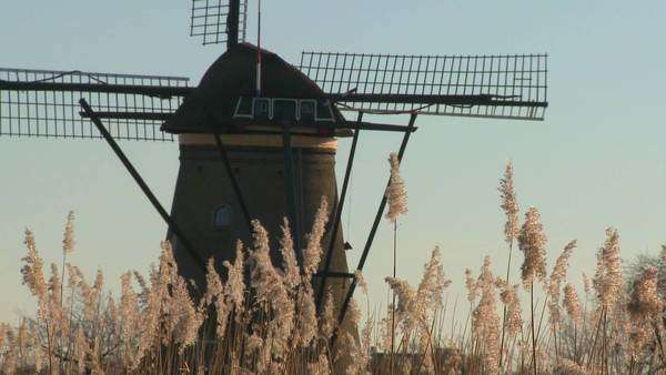 A windmill rises above tall grass in Holland. Royalty-free stock video