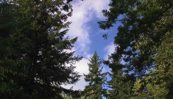 Strong winds blow a forested area of tress. Royalty-free stock video