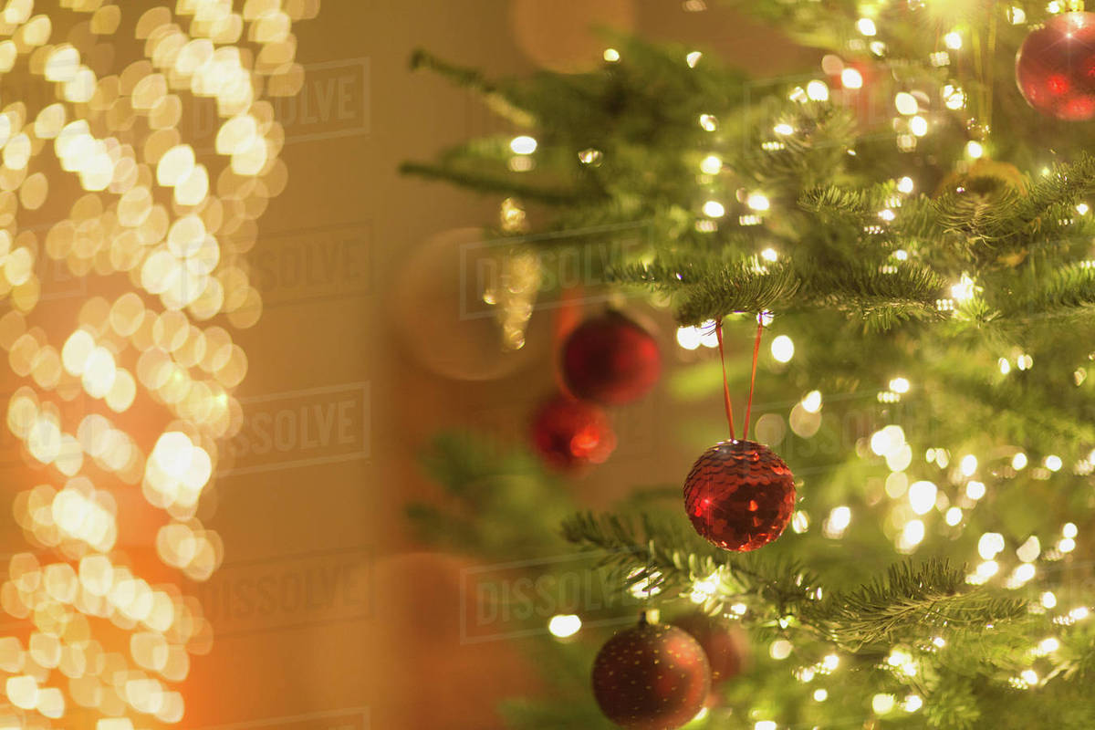 Red Ornaments Hanging From Christmas Tree With String Lights Stock Photo
