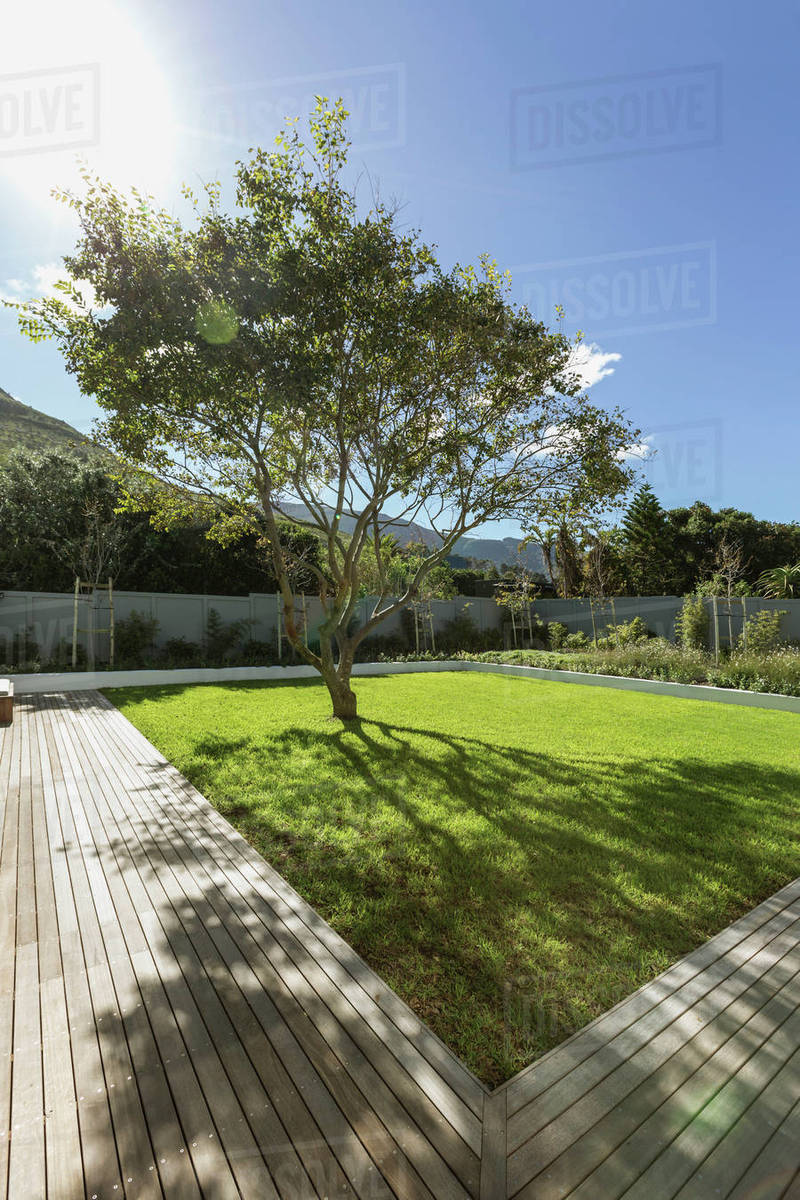 Sunshine casting tree shadow in luxury garden - Stock Photo - Dissolve