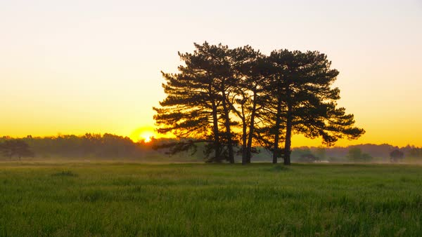 Sunrise in green meadow with six pines in the middle in Askania-Nova, Ukraine Royalty-free stock video