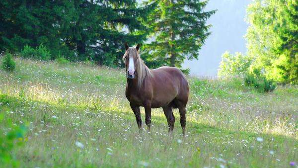 Horse grazing in a meadow at sunrise in the mountains Royalty-free stock video