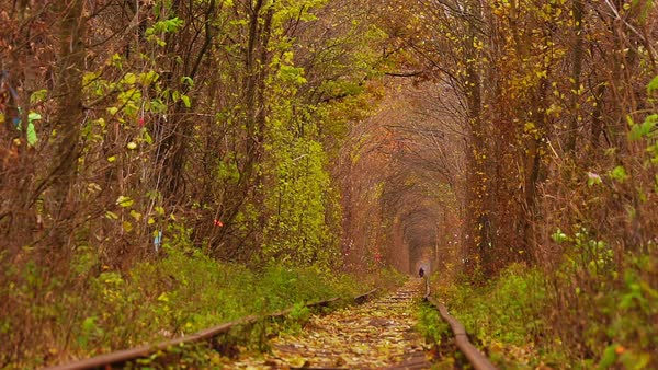 Man Walking on Abandoned Railway under Autumn Colored Trees of Tunnel. Royalty-free stock video