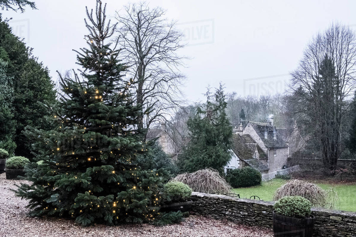 A winter garden, a tall pine tree with lights in the branches, Christmas decorations. A traditional stone cottage with slate roof and smoke rising from the ...