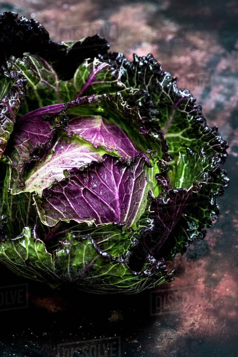 Still Life A Fresh Round Green Savoy Cabbage With Purple Red Leaves Stock Photo Dissolve