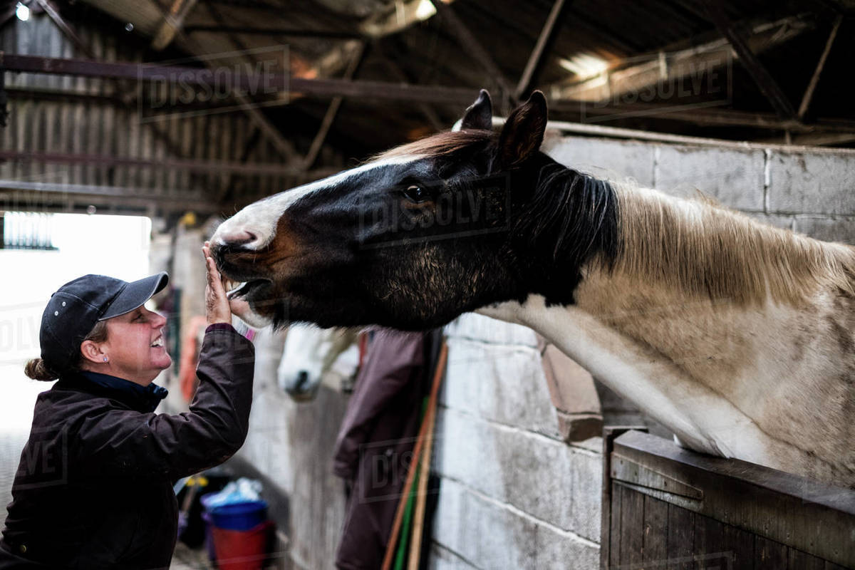 Smiling woman standing in stable, stroking nose of white and brown skewbald horse. Royalty-free stock photo