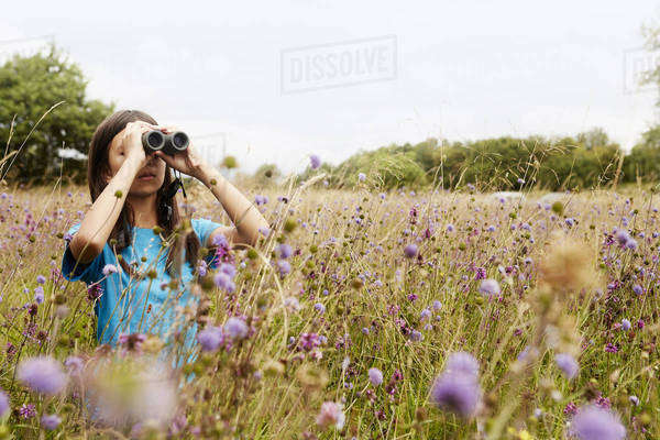 A girl holding binoculars, a young bird watcher standing in a meadow of tall grass and wild flowers.  Royalty-free stock photo