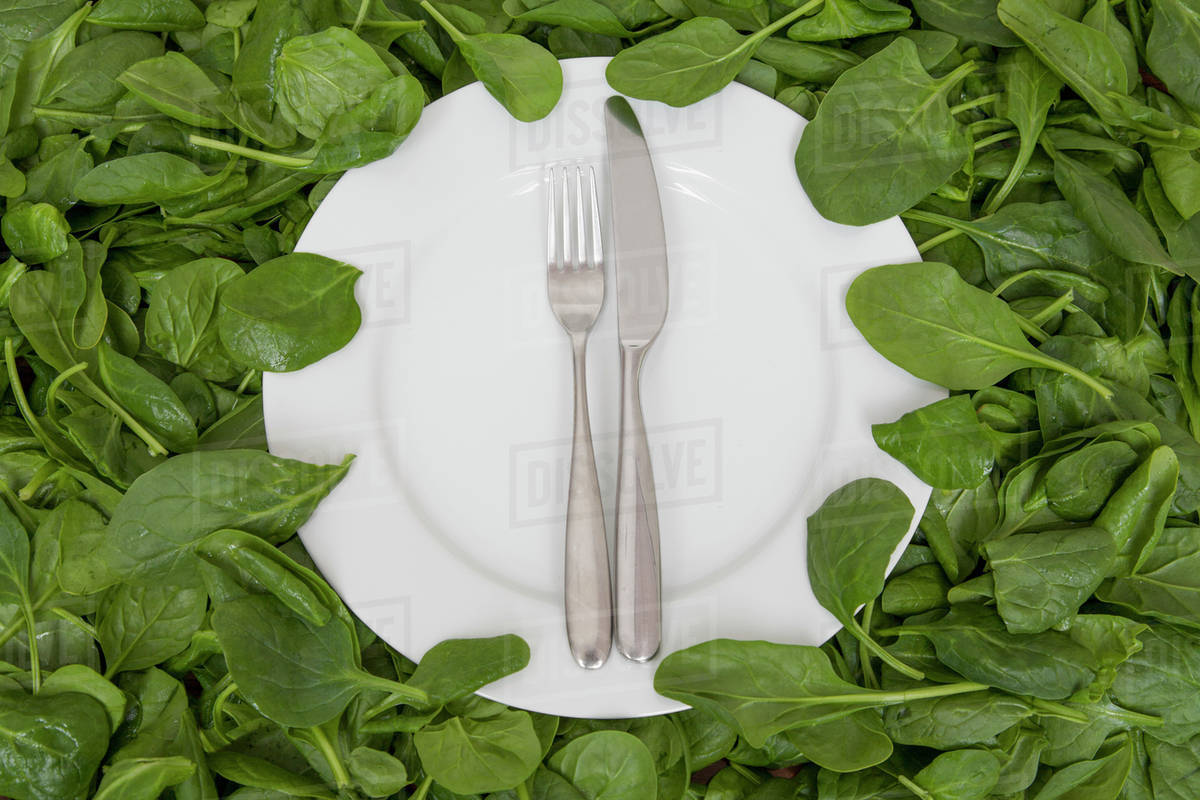 A white china plate with a knife and fork, resting on edible leaves  The  concept of healthy eating  stock photo