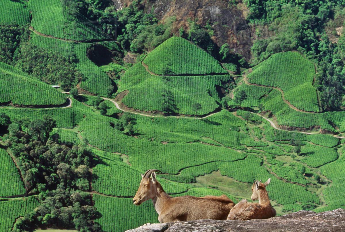 Eravikulam | List of National Park in India