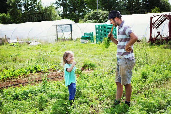 A man and a girl eating freshly harvested carrots in a vegetable patch. Royalty-free stock photo