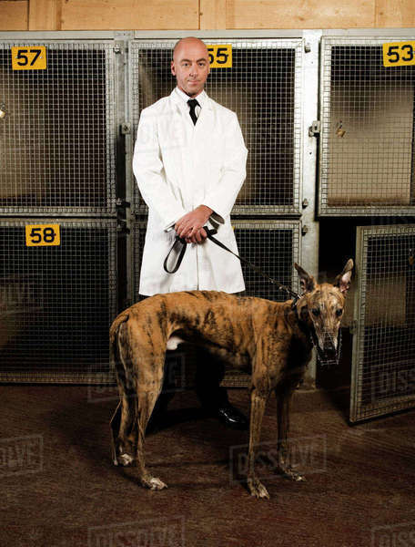 Dog handler standing in front of a cages in a greyhound track kennel, holding a brindle dog on a lead. Royalty-free stock photo