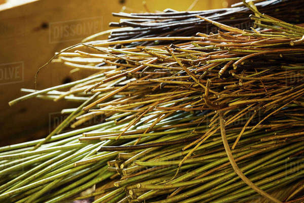 Close up of willow bundles in a basket weaver's workshop. Royalty-free stock photo