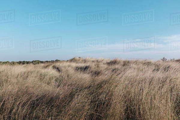 View of a grassy coast Royalty-free stock photo