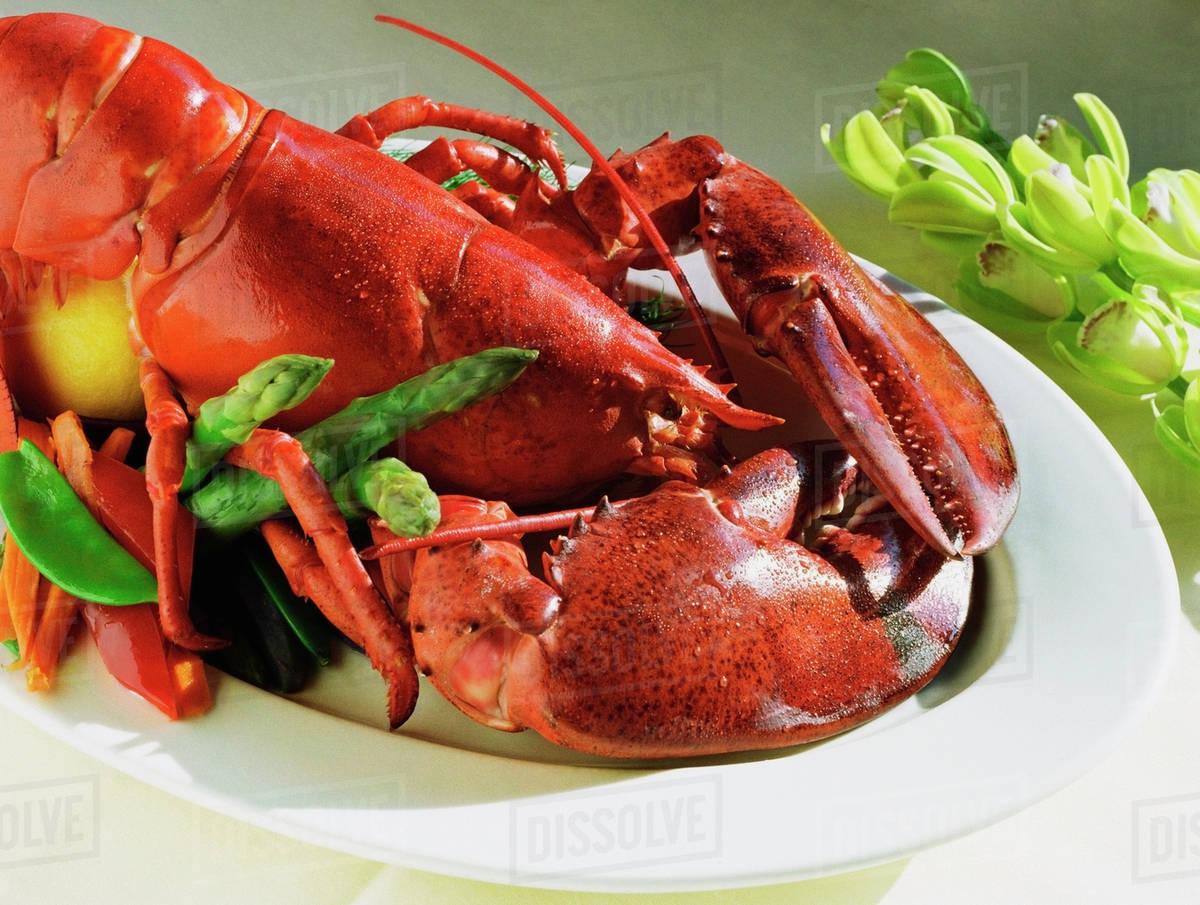 Lobster dinner - Stock Photo - Dissolve