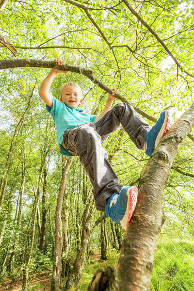 Boy (8-9) hanging on branch Royalty-free stock photo