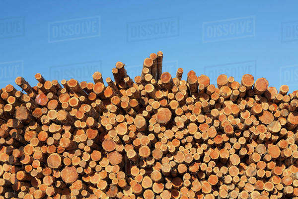 Stack of timber Royalty-free stock photo