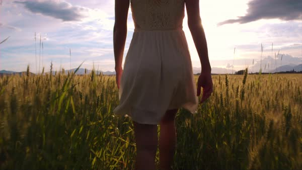 Slow-motion - Walking behind beauty girl in wheat field. Stopping and letting her go forward Royalty-free stock video