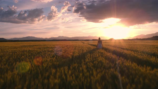 Epic shot of pretty girl in a white dress walking in the yellow wheat field at sunset Royalty-free stock video