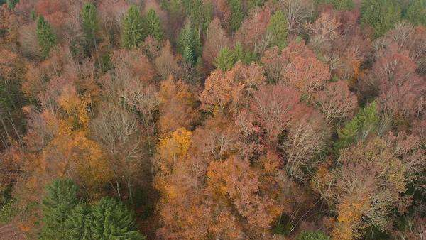 Aerial - Autumn forest with beautifully colored leaves Royalty-free stock video