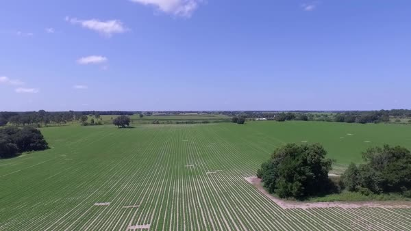 Aerial shot of crop field in Florida Royalty-free stock video