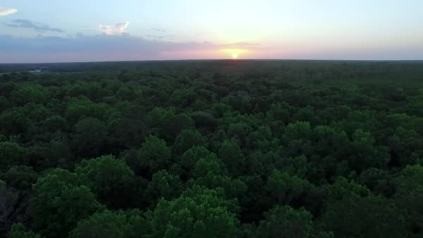 Aerial shot of sunset over forest Royalty-free stock video