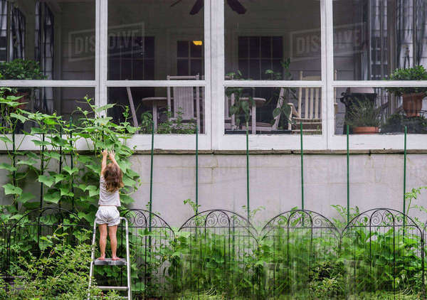 Rear view of girl standing on ladder reaching for flowers in yard Royalty-free stock photo