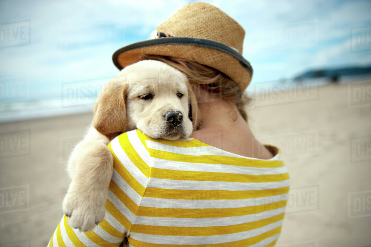 Woman hugging golden retriever puppy on beach stock photo