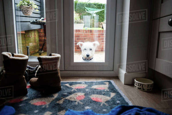 Portrait of dog seen through door window Royalty-free stock photo