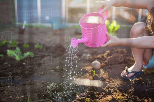Midsection of girl watering seedling in backyard Royalty-free stock photo