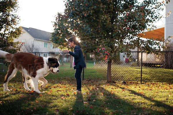 Side view of girl playing with Saint Bernard while standing on field in backyard Royalty-free stock photo
