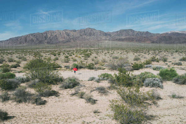 Mid distance view of boy with umbrella walking at Joshua Tree National Park Royalty-free stock photo