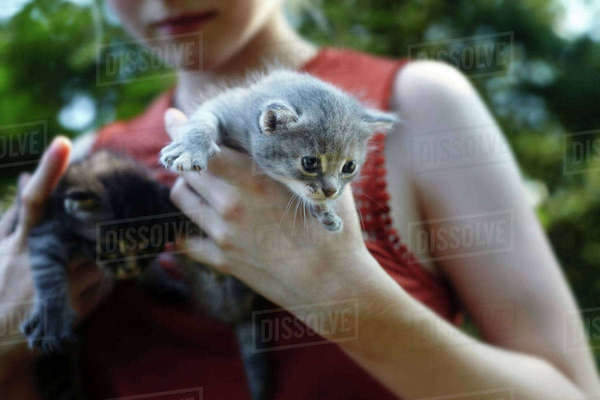 Midsection of woman carrying kittens at park Royalty-free stock photo