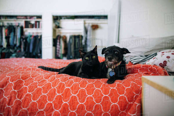Portrait of cat and dog lying on bed at home Royalty-free stock photo