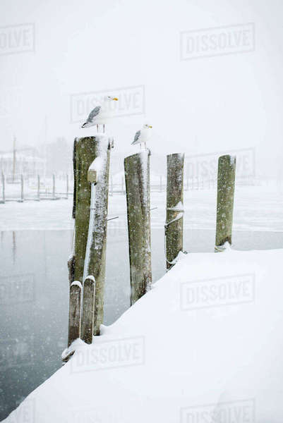 Seagulls perching on wooden posts during winter Royalty-free stock photo