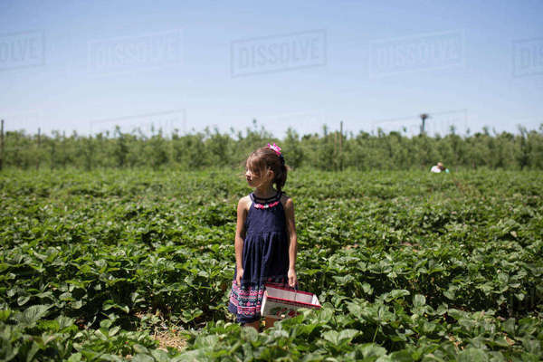 Girl looking away while standing on strawberry farm against clear sky Royalty-free stock photo