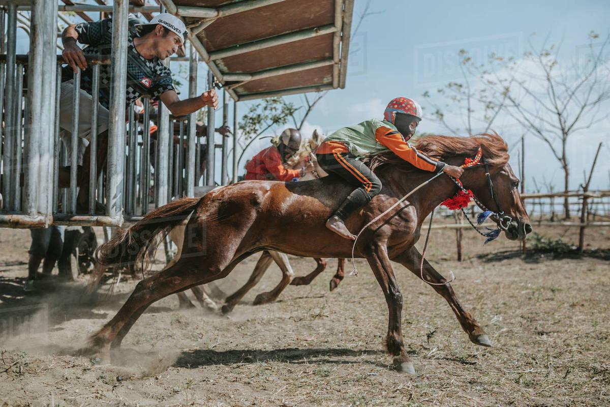 Child Jockeys On Racehorses At Starting Gate During Horse Racing Stock Photo Dissolve