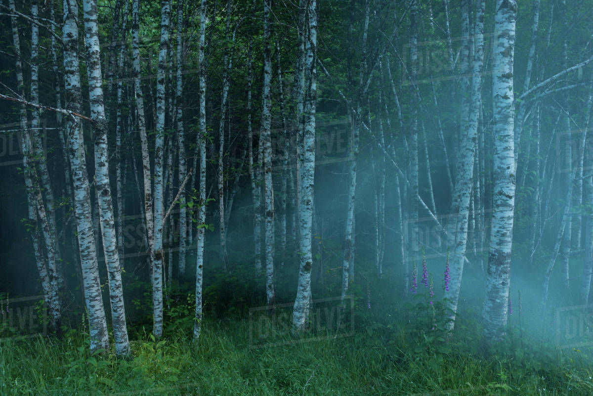 Trees Growing In Forest At Night Stock Photo Dissolve