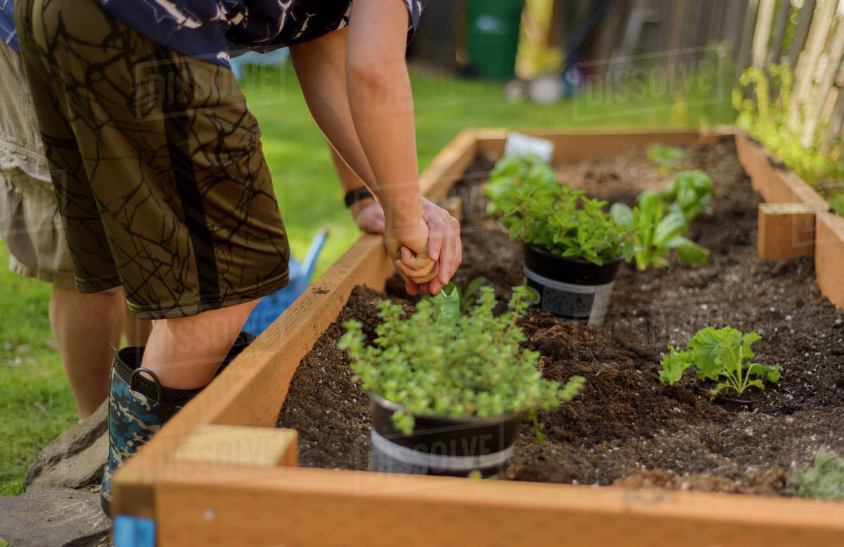 Boy digging soil in raised-bed gardening at backyard - Stock Photo ...