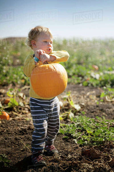 Boy carrying pumpkin on field during sunny day Royalty-free stock photo