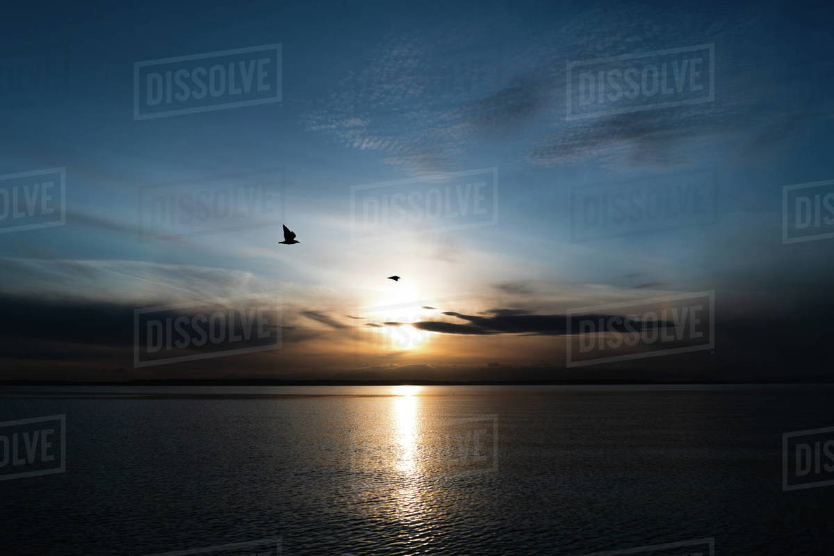 Two sea gulls fly above the Puget Sound at sunset Royalty-free stock photo