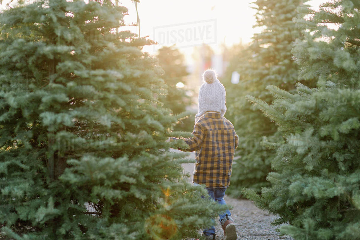 Young boy walking in christmas trees at sunset Royalty-free stock photo