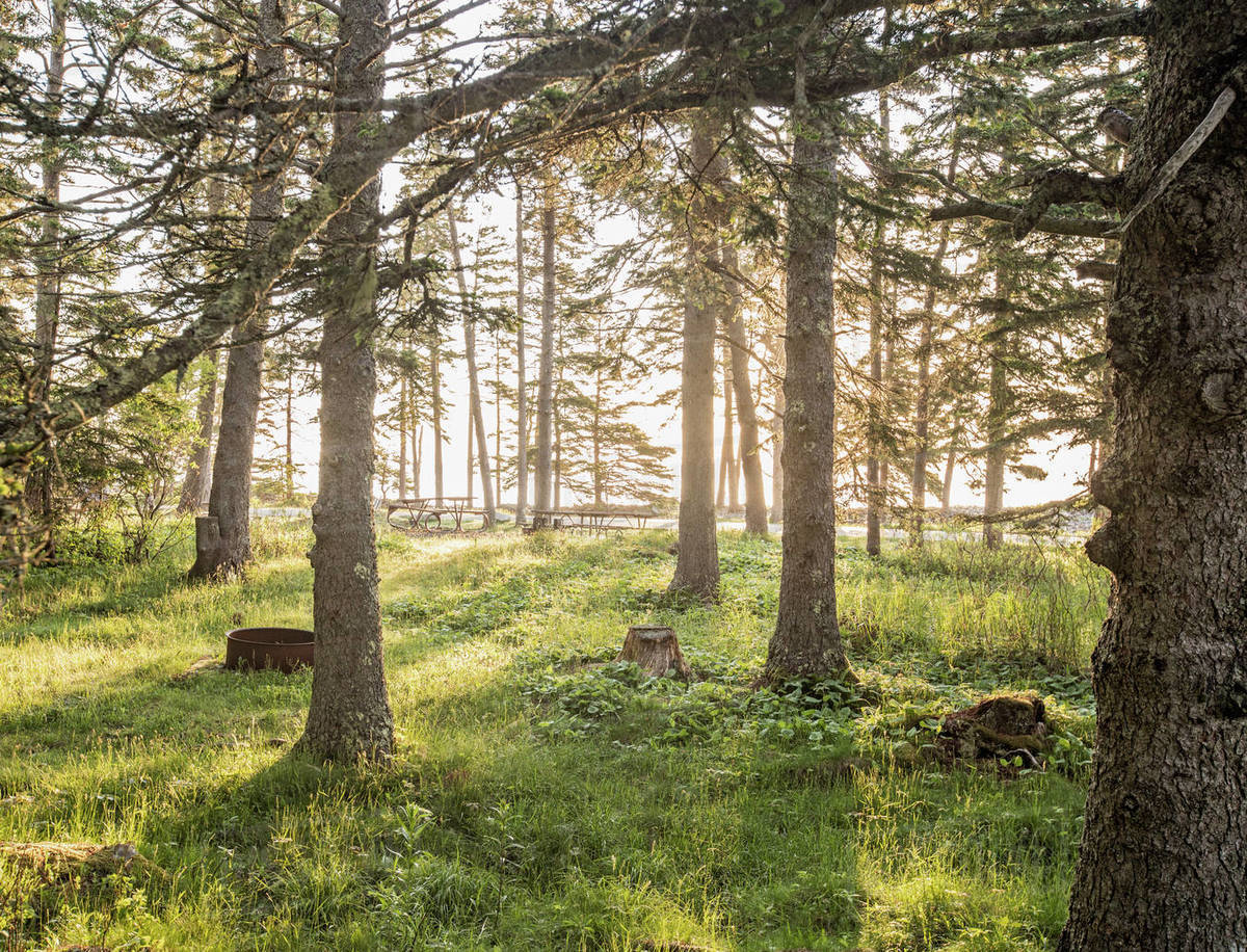 Golden sunlight filters through trees onto picnic area in Maine Royalty-free stock photo