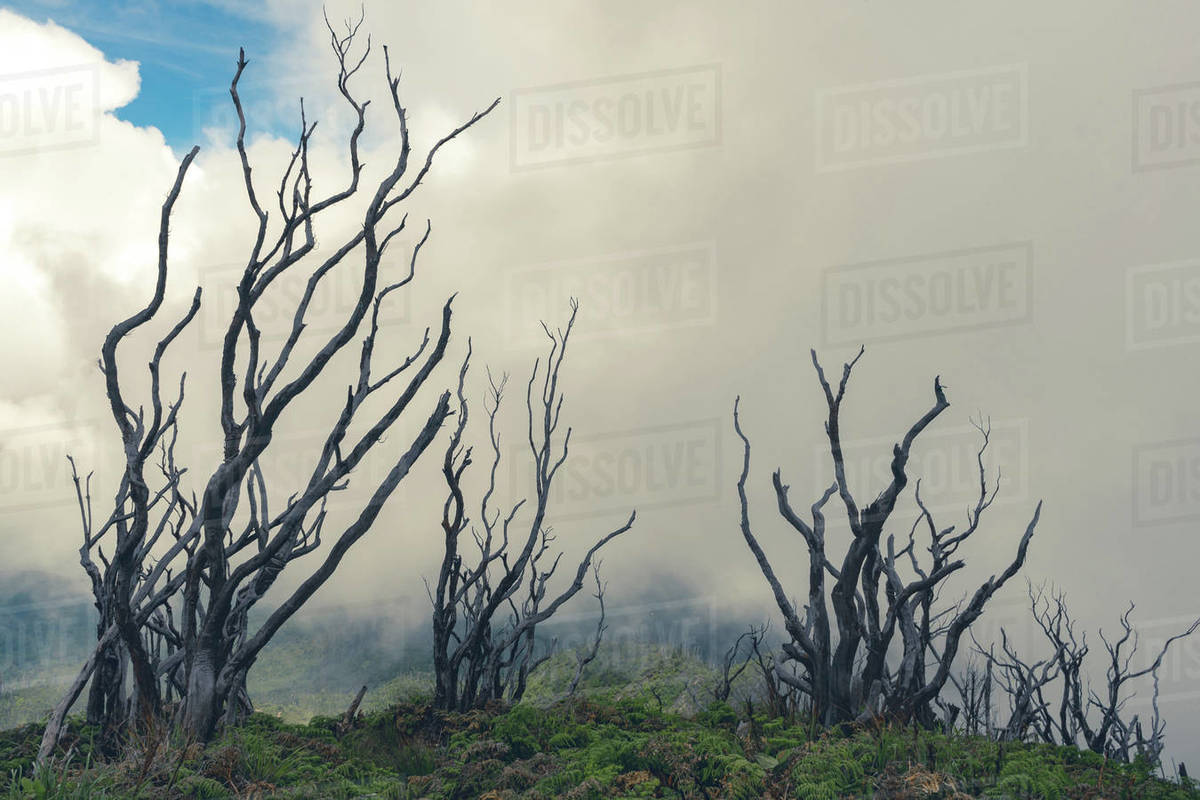 Dead trees scene taken while hiking Talang volcano in West Sumatra Royalty-free stock photo