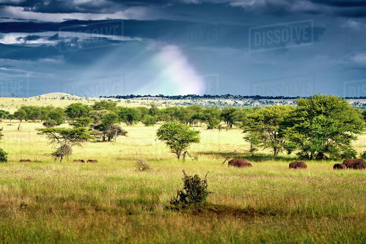 Herd of Elephants walking under a rainbow Royalty-free stock photo