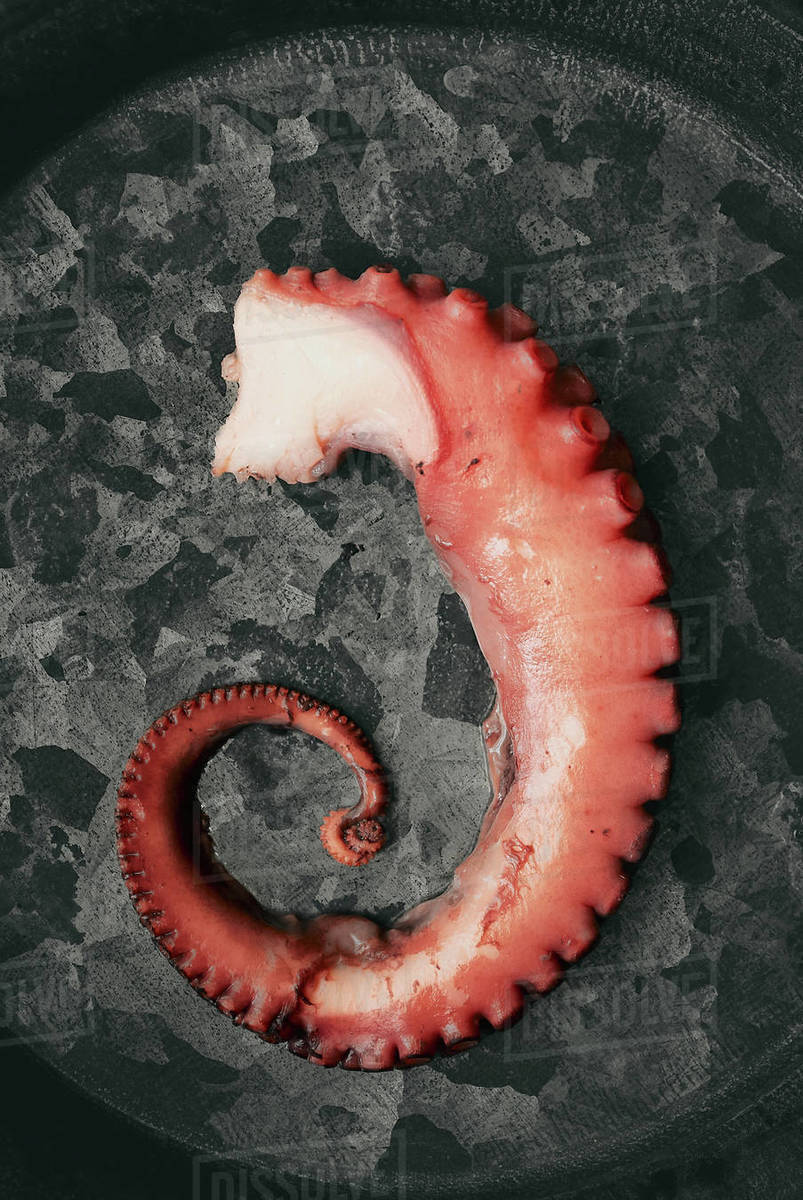 A piece of a boiled octopus Royalty-free stock photo