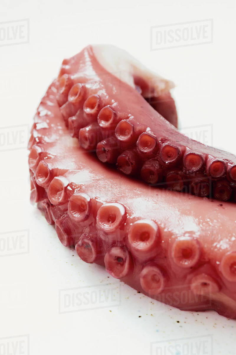 Close up of a boiled octopus Royalty-free stock photo