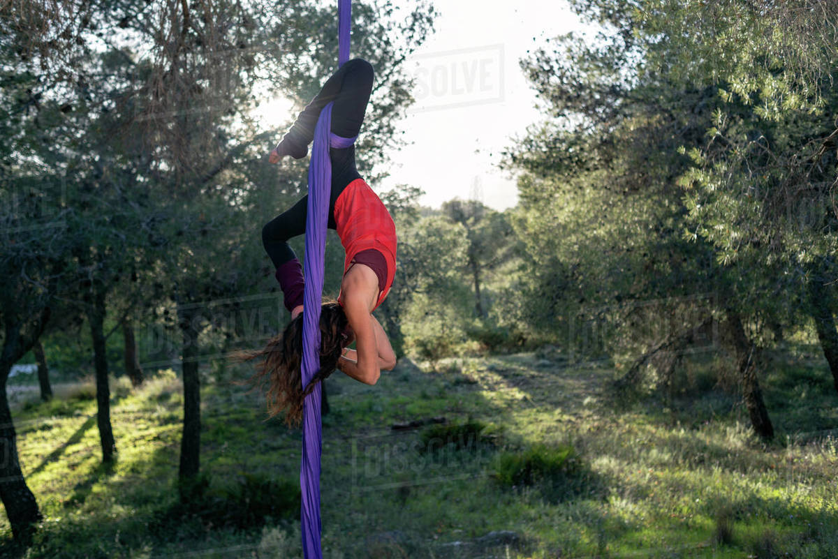 Young girl acrobat. Practicing aerial silks. Woman doing circus stunts with clothes in the forest. Sunstar. Scorpio cocoon position trick. Royalty-free stock photo