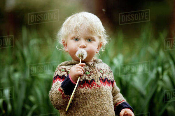 Portrait of child (12-17 months) with dandelion Royalty-free stock photo