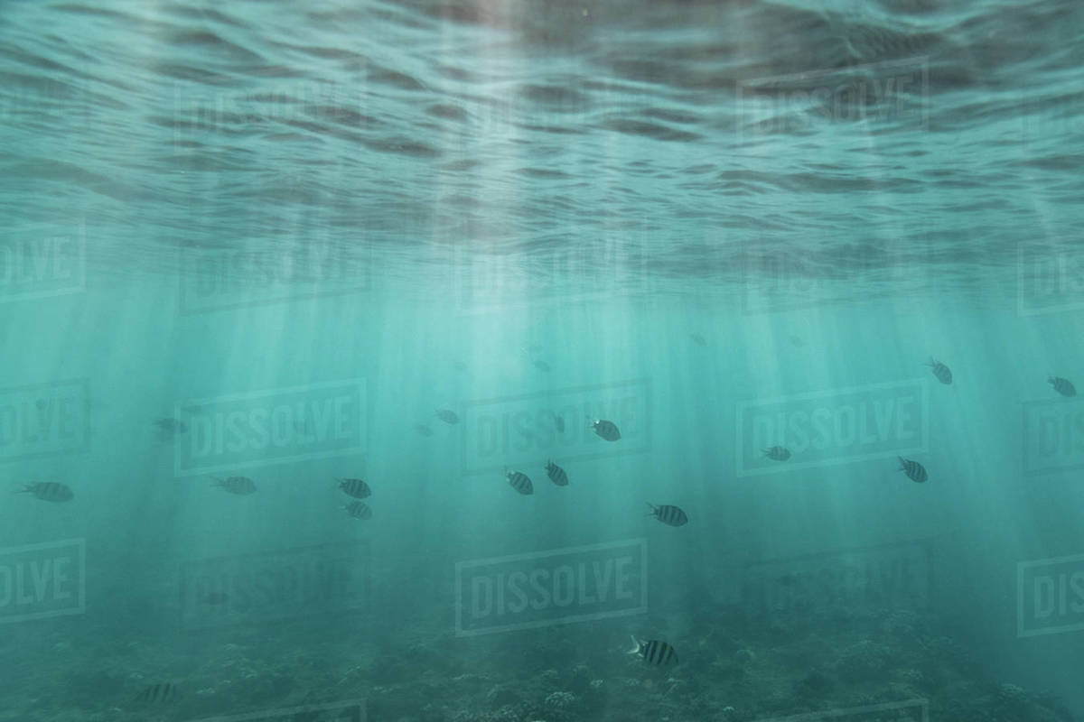 A school of fish swim through light streaks beneath ocean surface Royalty-free stock photo