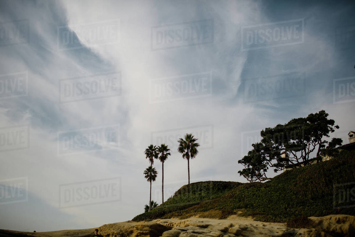 Low Angle View of Cliffs & Palm Trees at Windansea Beach in San Diego Royalty-free stock photo